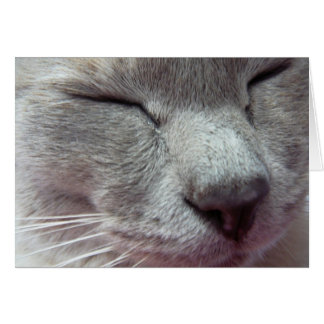 Cat's face greeting card