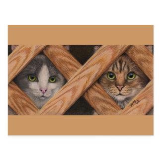Cats Grey Tabby behind lattice fence postcard