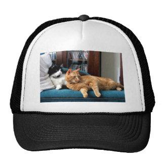 Cats Trucker Hat