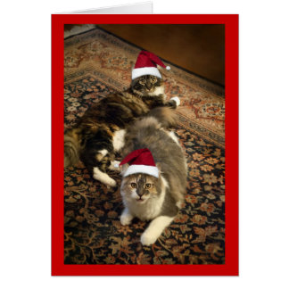 Cats in Santa Hats Christmas funny greeting card