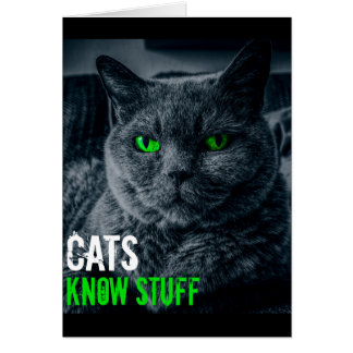 Cats Know Stuff Card
