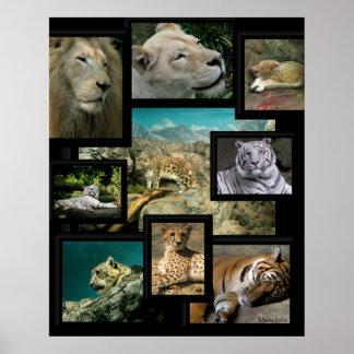 Cats of the Cincinnati Zoo ~ poster prints