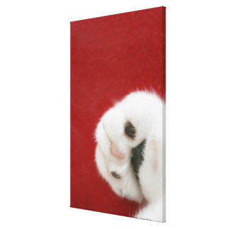 Cat's paw stretched canvas print