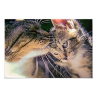 cats photograph