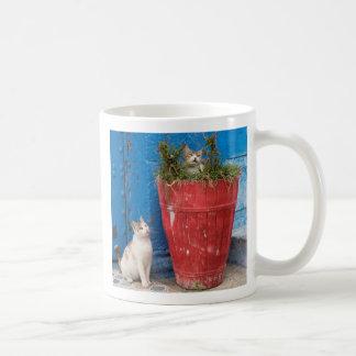 Cats playing around, Rabat, Morocco Coffee Mug