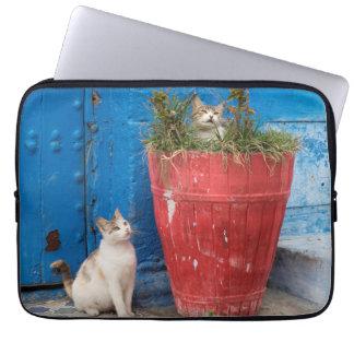 Cats playing around, Rabat, Morocco Laptop Sleeve