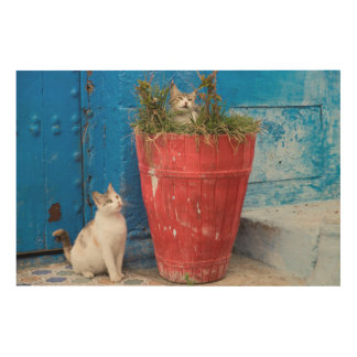 Cats playing around, Rabat, Morocco Wood Wall Art
