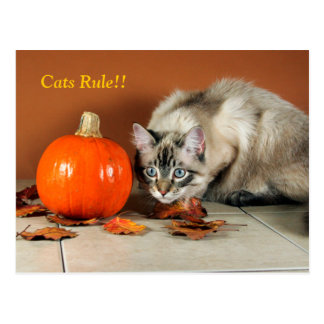 Cats Rule Siamese Post Card