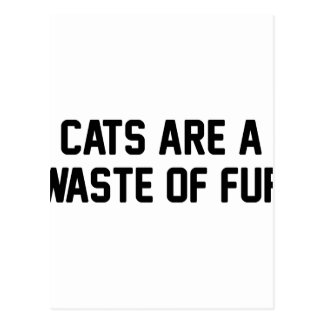 Cats Waste of Fur Postcard