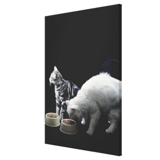 Cats with bowl of food canvas print