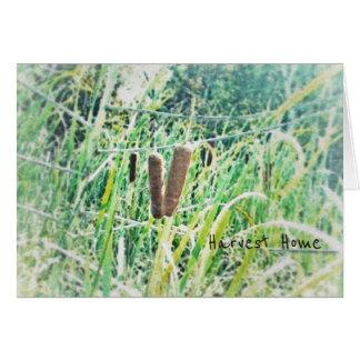 Cattails Harvest Home Mabon Autumn Equinox Card