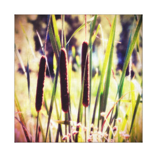 Cattails in Sunlight in Marsh Retro Photo Style Canvas Print