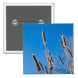 cattails of winter pinback buttons