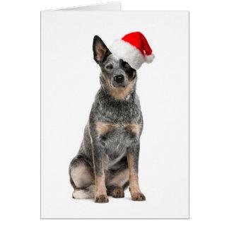 Cattle Dog Christmas Card