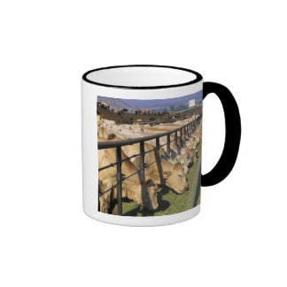 Cattle eat at a feedlot in Grandview, Idaho. Ringer Mug