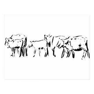 Cattle Illustration Postcard
