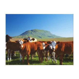 Cattle In Kamberg Valley, Kwazulu-Natal Gallery Wrap Canvas