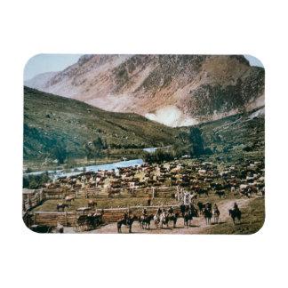 Cattle Ranch, Colorado, 1899 (photo) Rectangular Photo Magnet