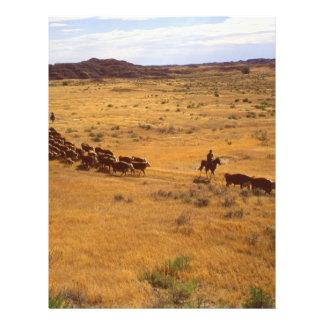 Cattle roundup 21.5 cm x 28 cm flyer