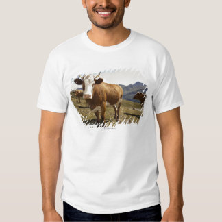 Cattle Tshirts