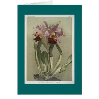 Cattleya Hardyana Orchid Greeting Card