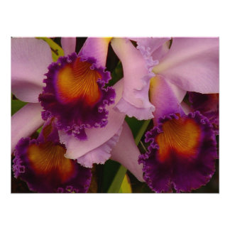Cattleya Hybrid Orchid Framed Print