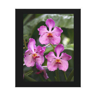 Cattleya Orchids Wrapped Canvas