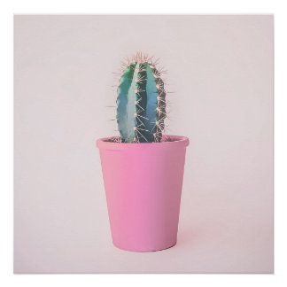 Catus in pink pot poster