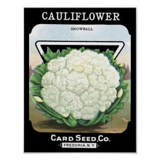 Cauliflower Card Seed Co. packet Fredonia, NY Poster
