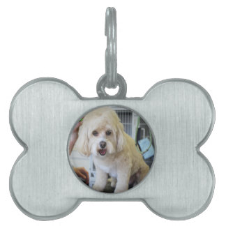 Cavachon Dog Tag, Upload Your Dog Here Pet Name Tag