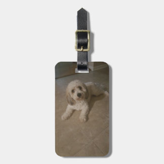Cavachon Photo Luggage Tag,  Add Your Dog Photo Luggage Tag
