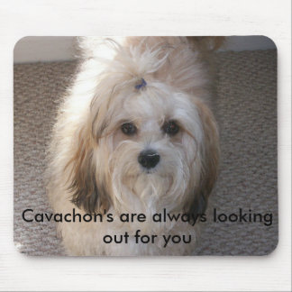 Cavachons are always there mouse pad