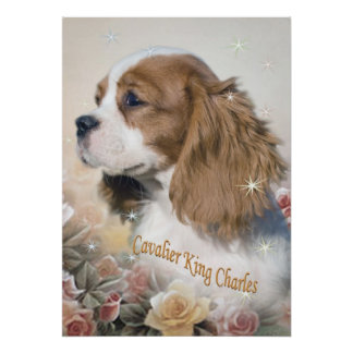 Cavalier King Charles among roses Prints