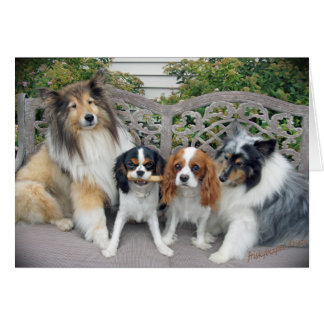 Cavalier King Charles  and Shelties Card