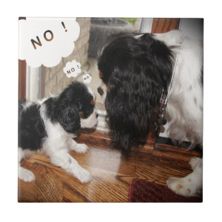 Cavalier King Charles Dad Says No Ceramic Tile