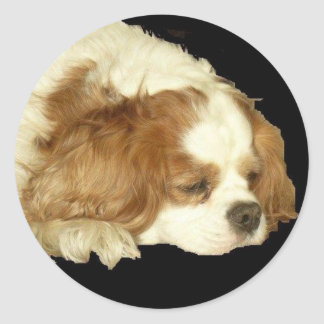 CAVALIER KING CHARLES SLEEPING CLASSIC ROUND STICKER