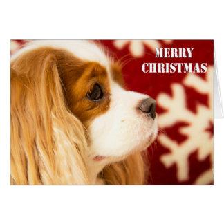 Cavalier King Charles Snowflake Christmas Card