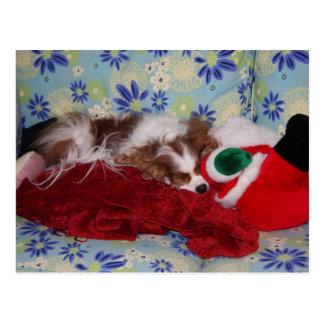 Cavalier King Charles Spaniel Christmas Overload Postcard