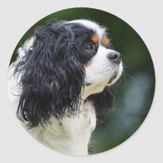 Cavalier King Charles Spaniel dog lovers round Classic Round Sticker