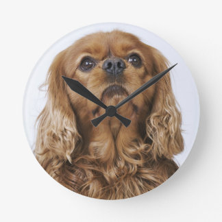 Cavalier King Charles Spaniel looking up Round Clock