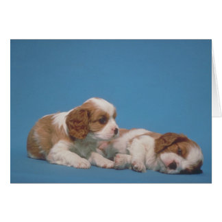 Cavalier King Charles Spaniel Puppies Card