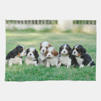 Cavalier King Charles Spaniel puppies Tea Towel