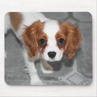 Cavalier King Charles Spaniel Puppy Mousepad