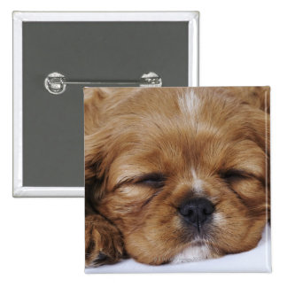 Cavalier King Charles Spaniel puppy sleeping Pinback Buttons