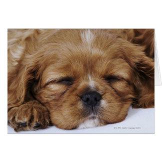 Cavalier King Charles Spaniel puppy sleeping Cards