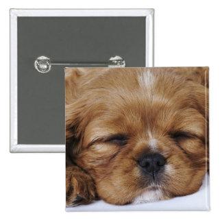 Cavalier King Charles Spaniel puppy sleeping Pins