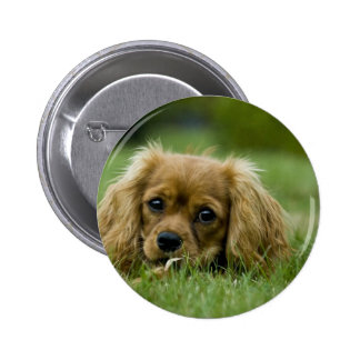 Cavalier King Charles Spaniel Ruby Pinback Buttons