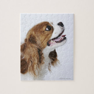 Cavalier King Charles Spaniel, side view Jigsaw Puzzle