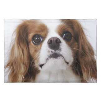 Cavalier King Charles Spaniel sitting in studio Placemat