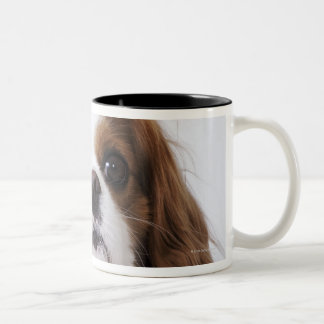 Cavalier King Charles Spaniel sitting in studio Two-Tone Coffee Mug